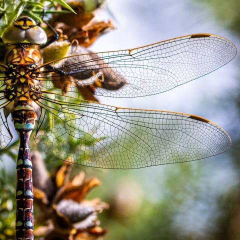 Dragonfly at North York Moors by Jonathan Green