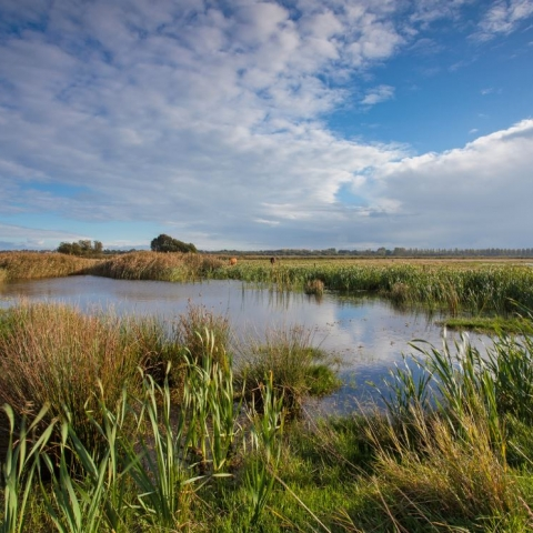 Carlton Marshes by Steve Aylward in the Broads National Park