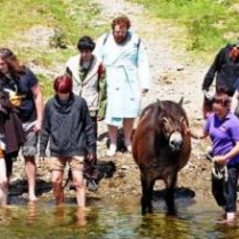 Exmoor Pony walk