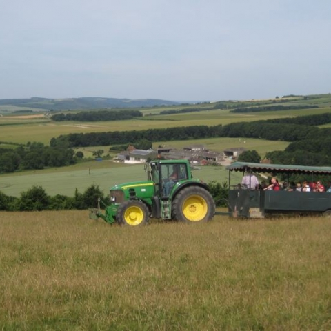 Farming in the South Downs