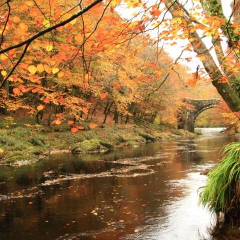 River Dart in Dartmoor.