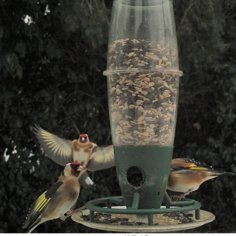 Goldfinches in action in the Broads