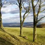 South Downs - Chanctonbury Ring looking East, February 2009 (Richard Reed)