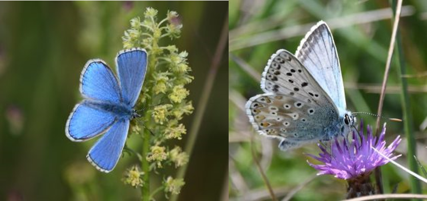 Look out for iconic butterfly species in the South Downs