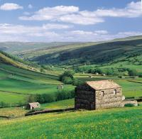 Field barns in the Yorkshire Dales