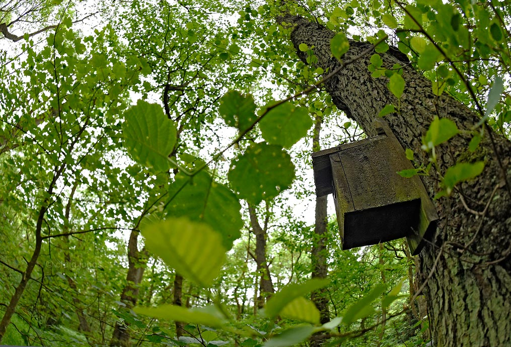 Flycatcher nestbox by Craig Jones