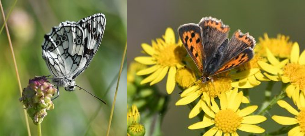 Get involved in the Big Butterfly Count