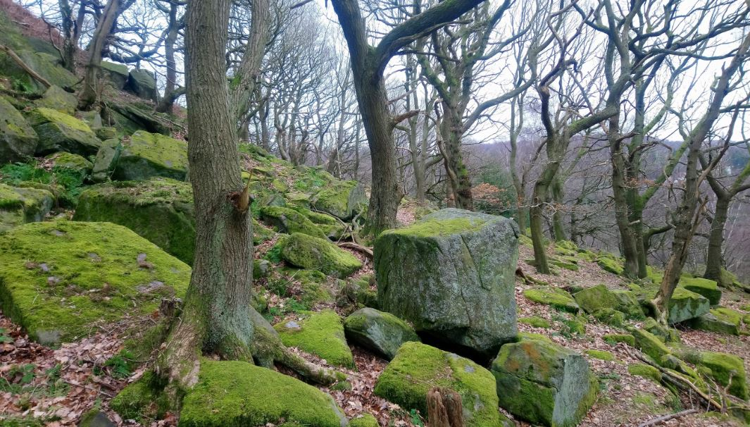Trees of the Peak District